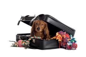 planificar-un-viaje-para-tu-mascota