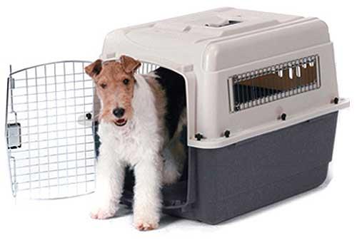 meter-perro-en-transportín