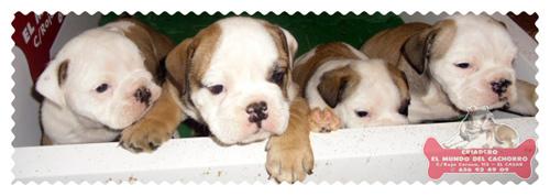 El Mundo del Cachorro - Criadero de perros