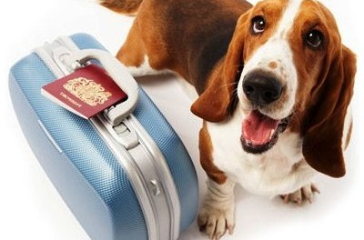 transporte mascotas vacaciones