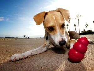 perro con su juguete favorito