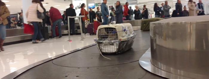 requisitos para viajar con mascotas en avión