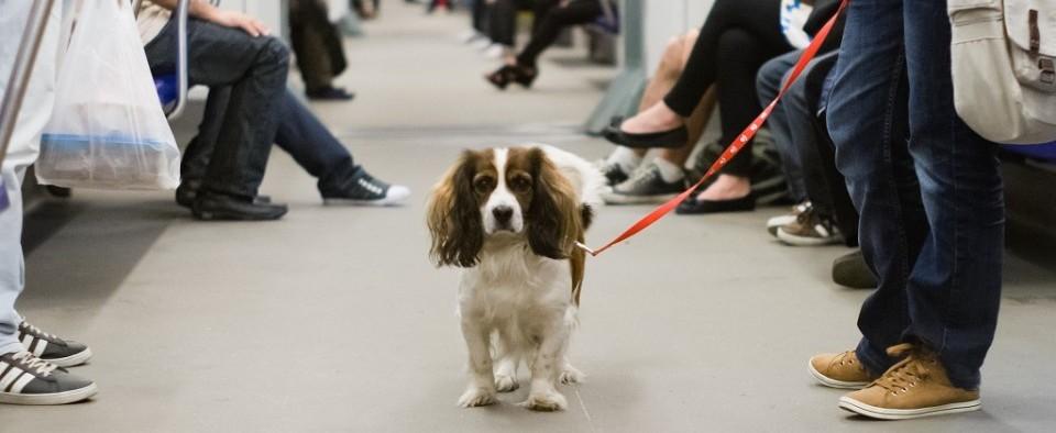 viajar con perros en el Metro de Madrid