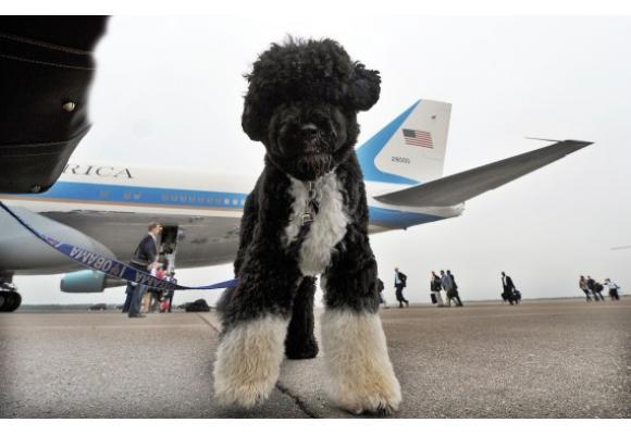 mascotas en avión