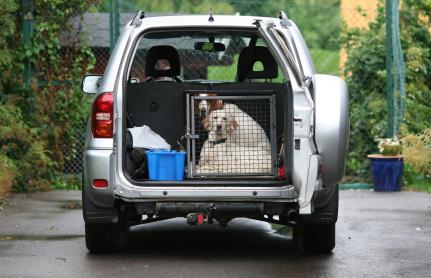 transportines para viajar con perros en coche