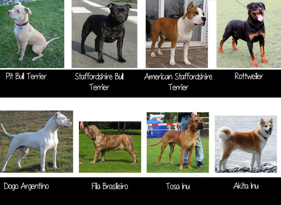 Razas de perro potencialmente peligrosas en España
