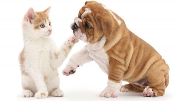 salud y bienestar perros y gatos