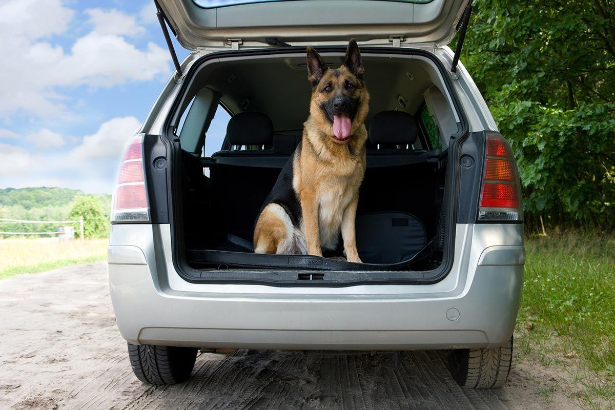 transporte de mascotas - empresas especializadas