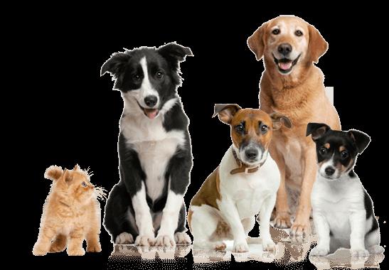 Clínicas veterinarias en Madrid - Mejores Veterinarios en Madrid