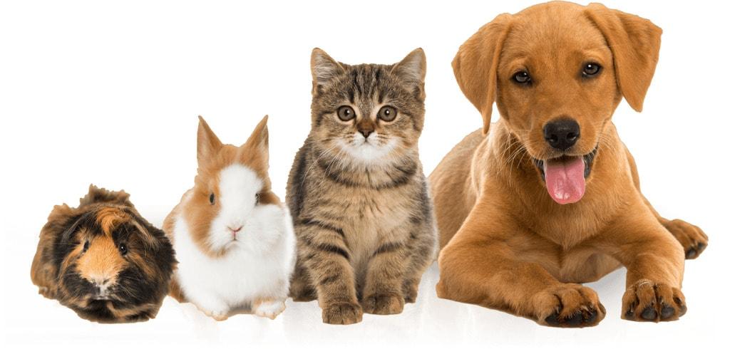 Información y opiniones sobre MRW Mascotas