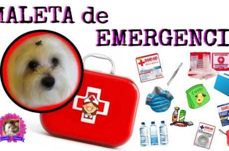 Primeros auxilios y botiquín de viaje para mascotas