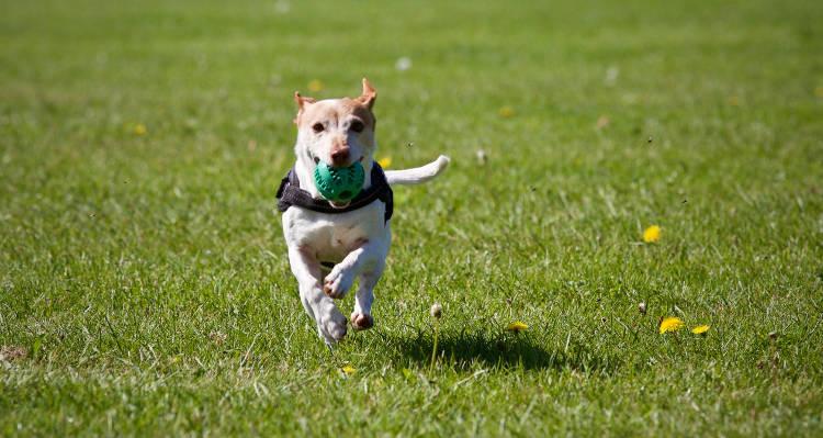Adiestramiento Canino en Centro Canino Chichet