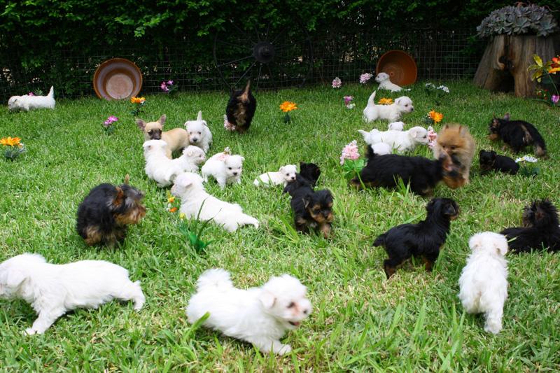 criaderos de perros en Madrid